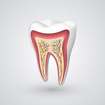 Endodontia - Tratamento e canal